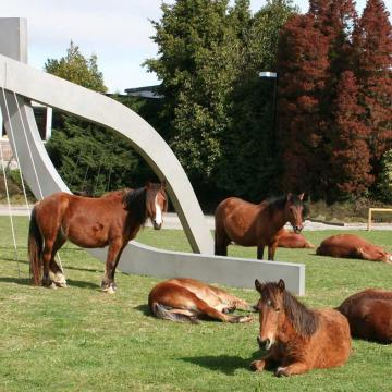 Cabalos do monte no campus